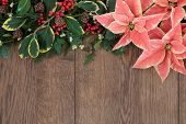 Pink poinsettia flower background border with christmas holly, mistletoe and winter greenery over ol