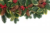 Christmas and winter background floral border with holly, ivy, mistletoe, pine cones and fir over wh