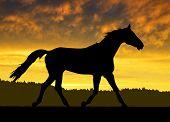 Horse under sunset