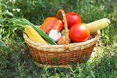 Fresh organic vegetables in wicker basket outdoors