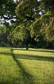 Under Trees