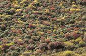 Fall Colors And Mountain Shrubs