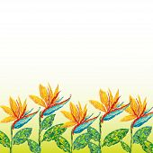 Strelitzia flowers abstract background beauty