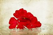 Romantic background of red flower and pearl beads on vintage paper