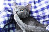 Cat on purple blanket closeup