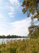 River Landscape With Reeds