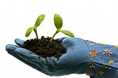Gardening Glove With Baby Plants
