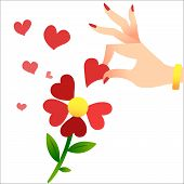 Guessing On The Petals. A Womans Hand Lifts The Heart Petals