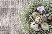 Quail Eggs In A Nest Of Hay On The Background Of Flax, Copy-space