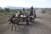 The Boys Transports Material With A Donkey
