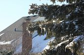 Town Homes and Fresh Winter Snow on Pine or Cedar Trees in Hoffman Estates Illinois
