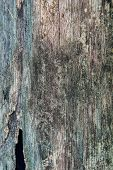 Old decay wood texture