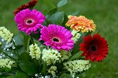 Colorful Bouquet From Gerbera Flowers