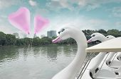 Pink Heart Love Balloon Float On Air With Swan Pedal Boat At Public Park