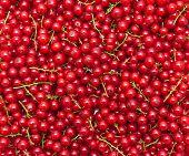 Ripe Juicy Red Currant Berries