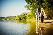 stock photo of brown horse  - Kiss of the groom and the bride during walk in their wedding day against a white horse and brown horse - JPG