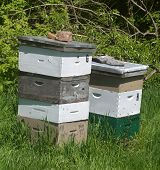 Honey Makers