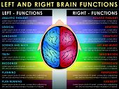 stock photo of right brain  - Left and right brain functions Cerebral function - JPG