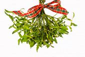 Bunch Of Mistletoe