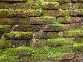 foto of weed  - Brick walls in red covered with weeds - JPG