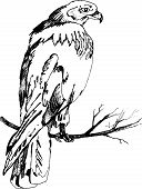 picture of hawk  - graphic sketch illustration hawk black on white background - JPG