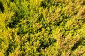 stock photo of vegetation  - background of green vegetation cover and yellow - JPG
