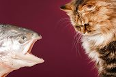 cat and fish