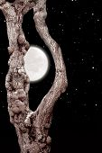 picture of night crawler  - tree with owl in bark - JPG