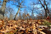 foto of winnebago  - A sunlit forest at Colored Sands Forest Preserve in Illinois - JPG