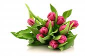 stock photo of flower arrangement  - Bouquet of pink tulips on a white background - JPG