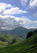 Sky & Land - Tea Plantation