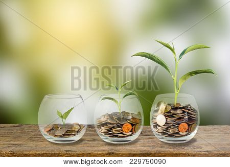 poster of Investment Concept. Growth Plant On Coins Three Step In Clear Glass Bottle On Wooden Table With Gree