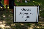 stock photo of stomp  - Grape Stomping Festival at Lakeridge Winery  - JPG