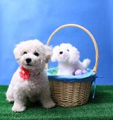 Dog. Dog with Easter Basket.  poster