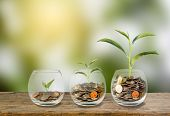 Investment Concept. Growth Plant On Coins Three Step In Clear Glass Bottle On Wooden Table With Gree poster