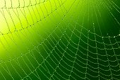 stock photo of spider web  - Spider web with water drops - JPG