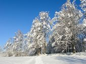 Winter Background. Frosty Branches Of The Winter Trees Against Blue Sky. Forest Winter Landscape Sce poster