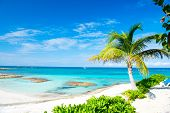 Palm Tree, Blue Sea, Sky In Great Stirrup Cay, Bahamas. Tropical Beach With White Sand And Turquoise poster