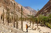 Tourist In The Peruvian High Andes On The Trekking On The Cotahuasi Canyon, Peru, South America poster