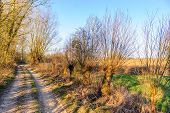 A Small Country Road In The Flemish Country Side In Belgium On A Clear Winter Evening. poster