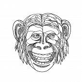 Doodle Art Illustration Of Head Of A Humanzee, Apeman Caveman Or Neanderthal, A Chimpanzee/human Hyb poster
