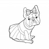 Beautiful Dog In A Dress And With A Bow. Coloring Book Page. Purebred Puppy. French Bulldog. Vector  poster