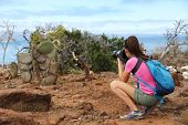 Galapagos tourist taking pictures of Land Iguana eating plant on North Seymour Island Galapagos Isla poster