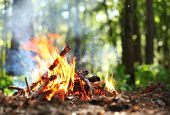 image of pain-tree  - Bonfire in the forest - JPG