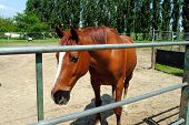 stock photo of feedlot  - brown horse in a cowshed concept of captivity - JPG