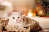 Cute White Cat With Scarf In Room Decorated For Christmas. Adorable Pet poster