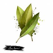 Bay Leaves Isolated On White Background. Dry Bay Leaf. Dried Laurel Bay Leaves In Bundle. Herbs Spic poster