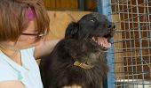 Volunteer In The Nursery For Dogs. Homeless Animal Shelter. Mongrel Dog Happy Visitor Shelter. Woman poster