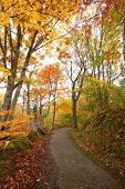stock photo of fukushima  - A colorful autumn path in the forest Fukushima Japan - JPG