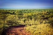 Serengeti savanna landscape with road in Tanzania, Africa.
